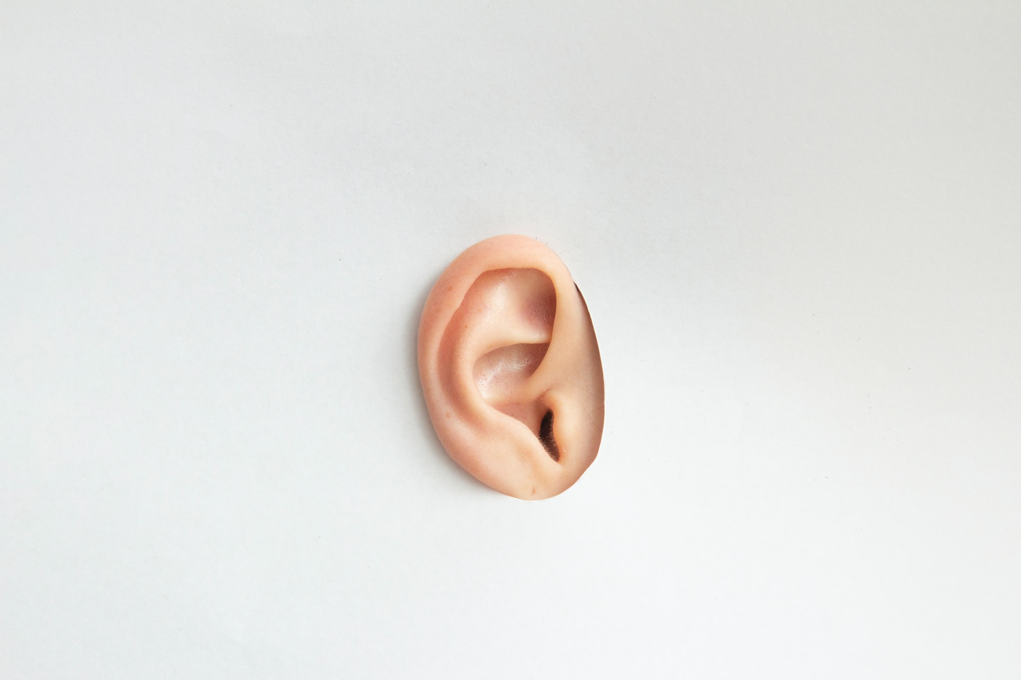 Ear on a white cardboard