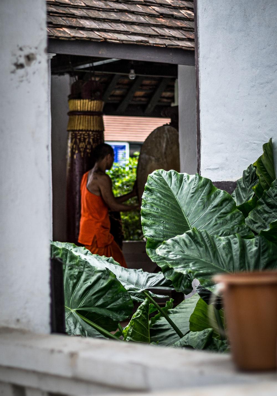 woman in orange dress standing beside green plant
