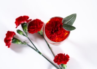 red flower in clear glass cup
