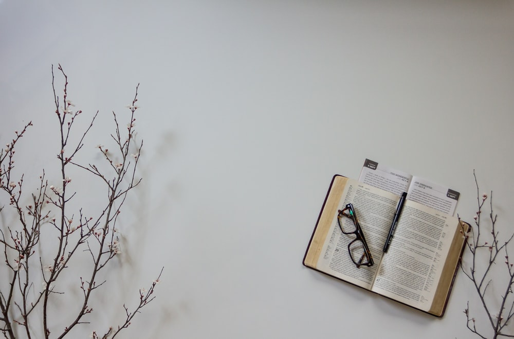 brown book on brown tree branch