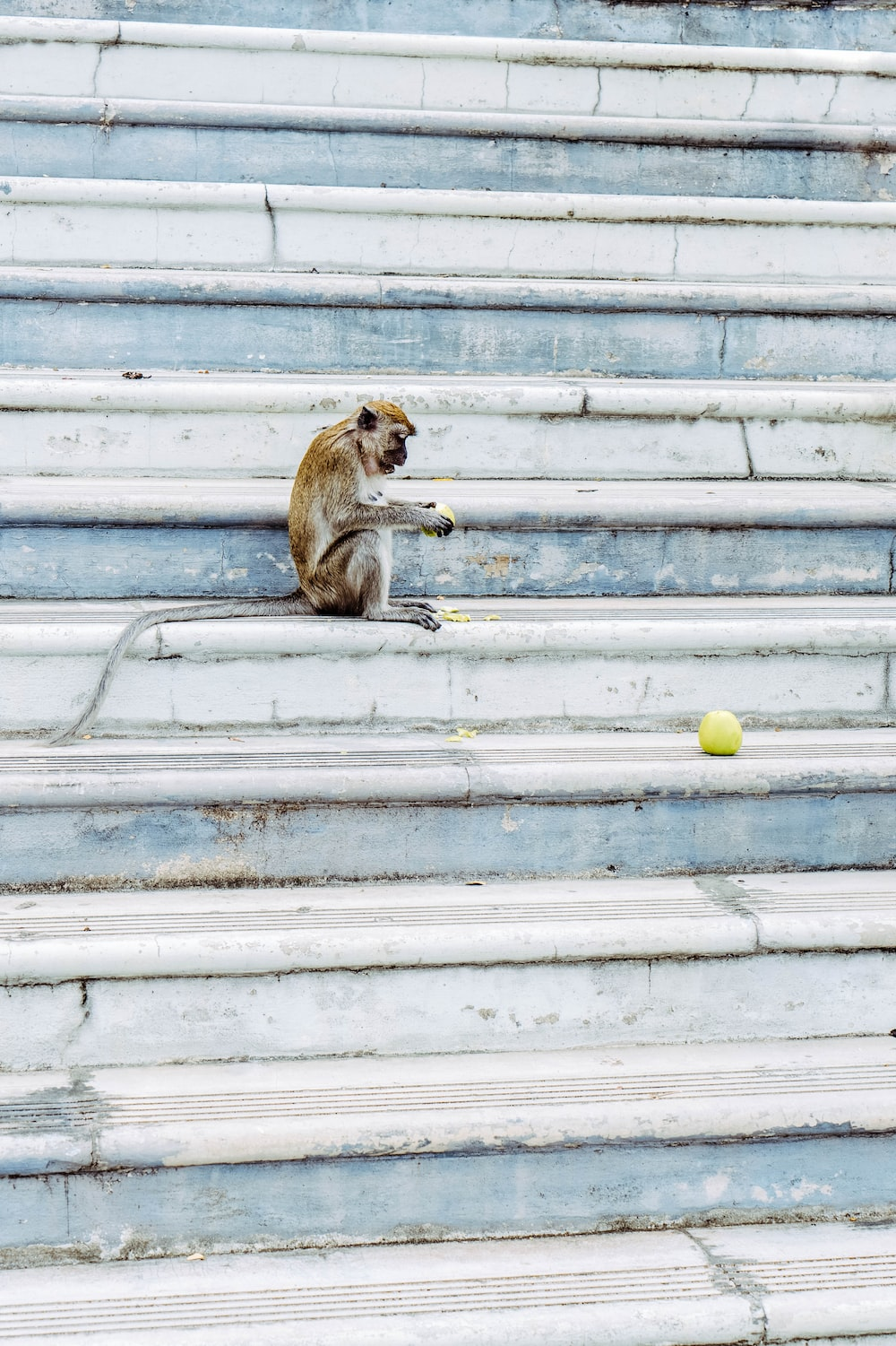 brown monkey sitting on gray concrete stairs
