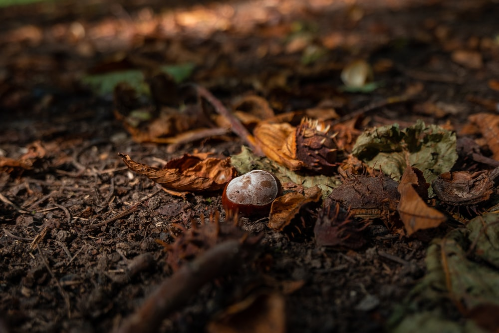 brown and white round fruit on ground