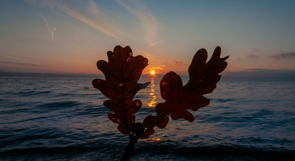 silhouette of plant near body of water during sunset