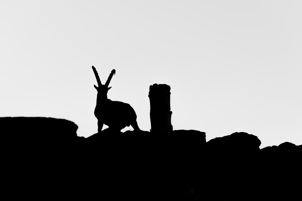silhouette of two deer on rock formation