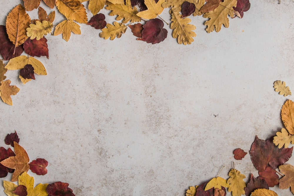 dried leaves on white concrete floor