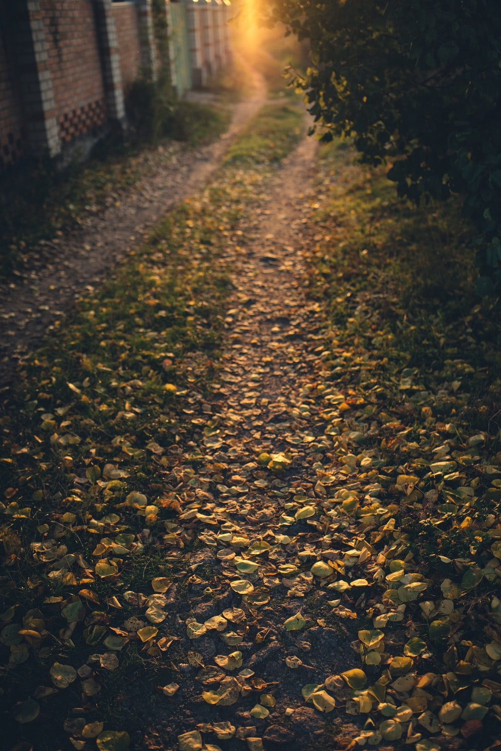 yellow leaves on the ground