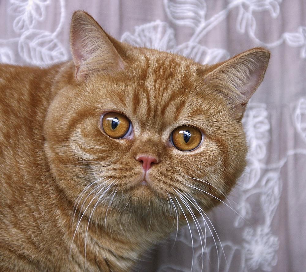 orange tabby cat on white textile