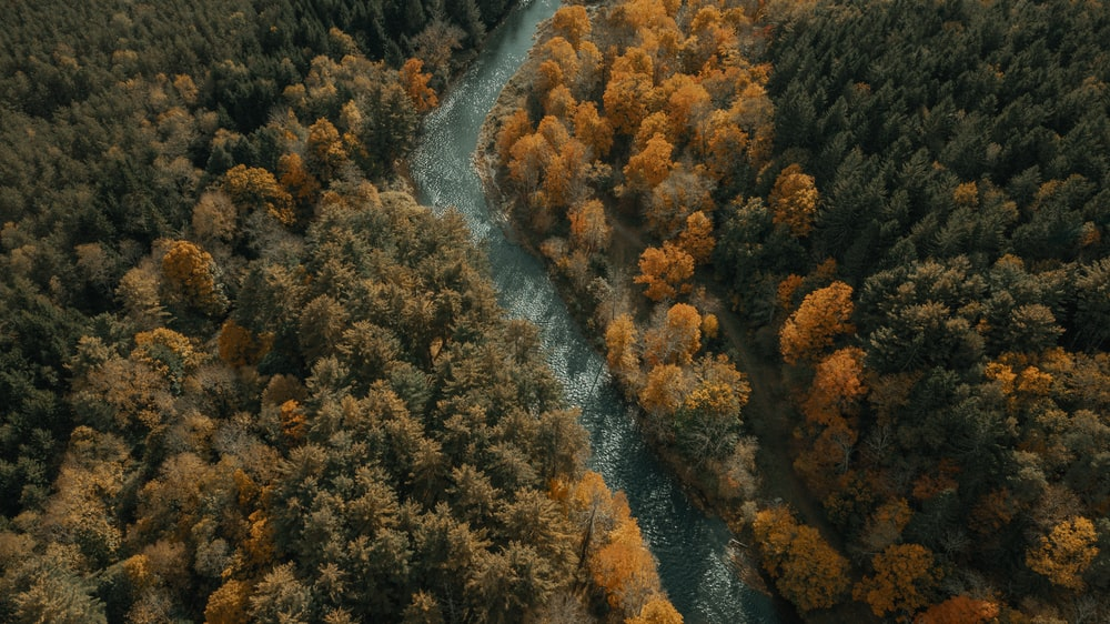 aerial view of river in between trees