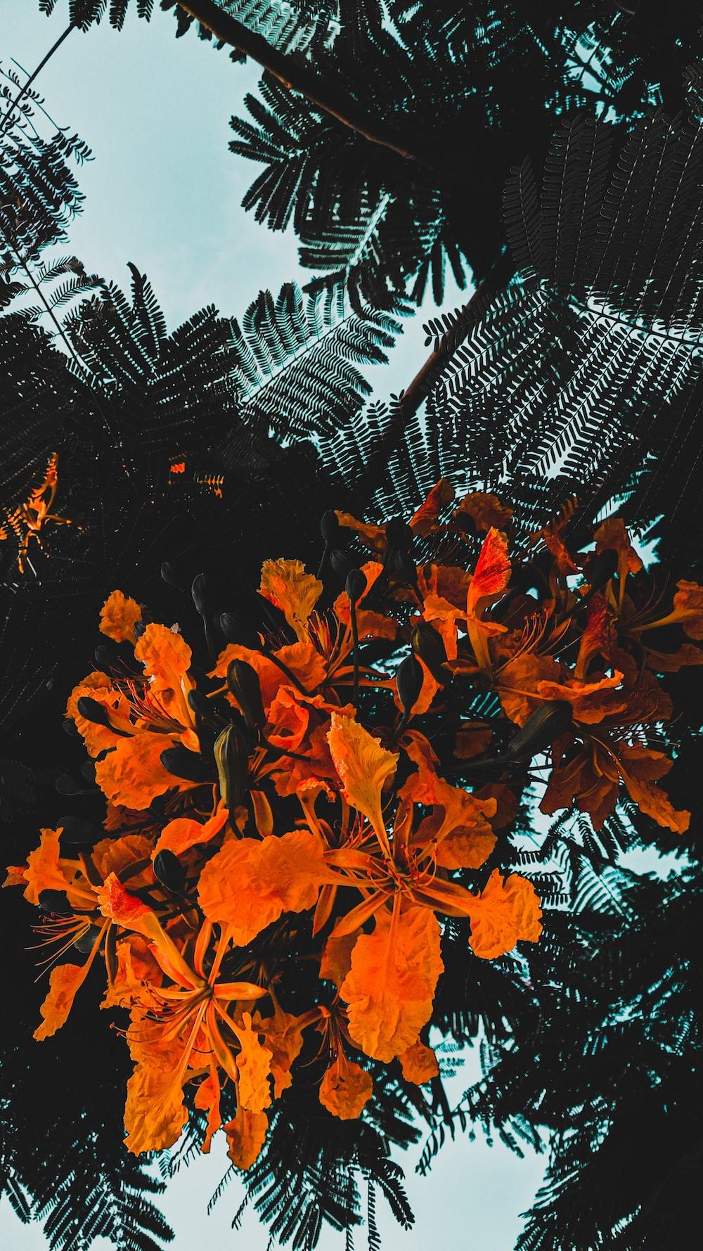 orange maple leaves on white and black net
