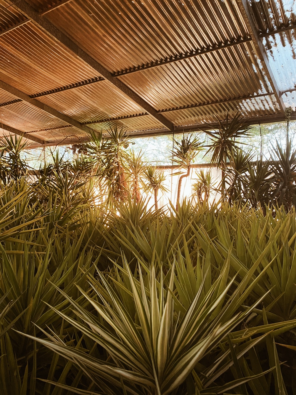 green palm plant near brown roof