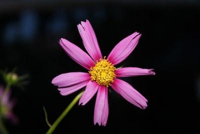Paramaribo purple flower in tilt shift lens