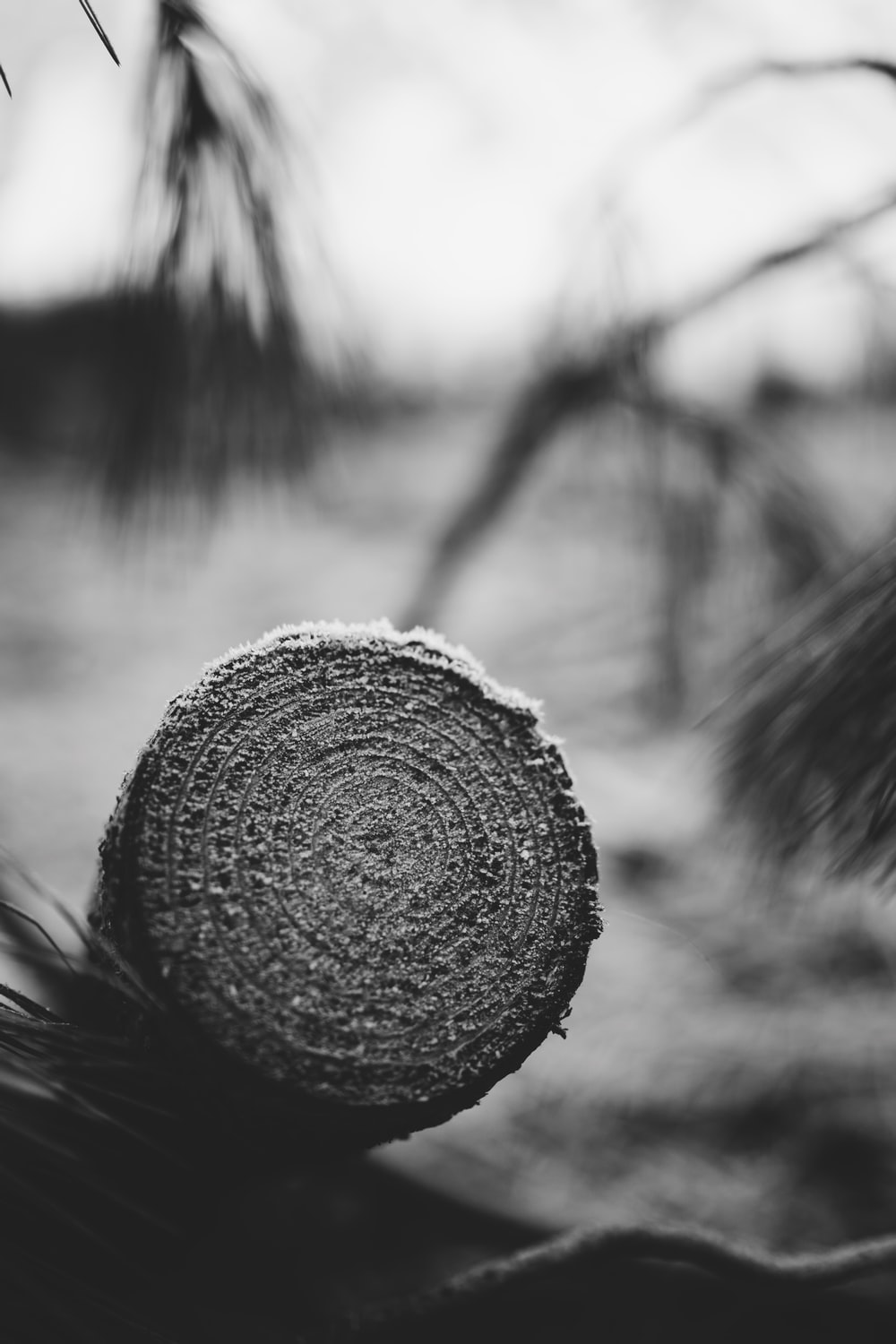 grayscale photo of round fruit