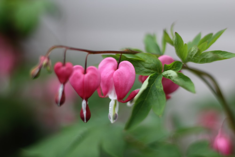 pink and green flower buds