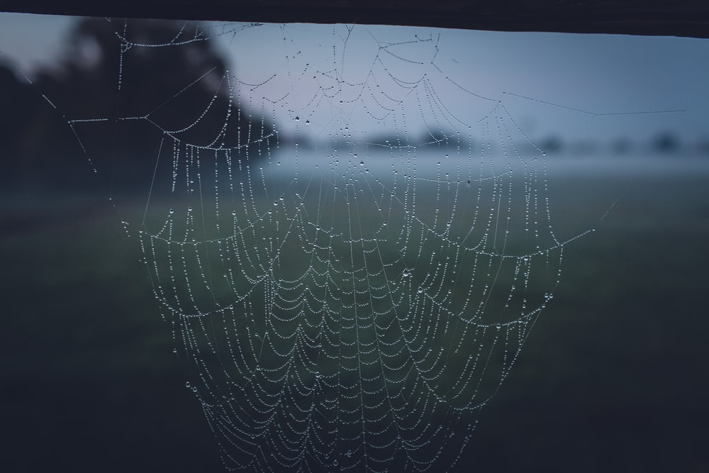 spider web with water droplets