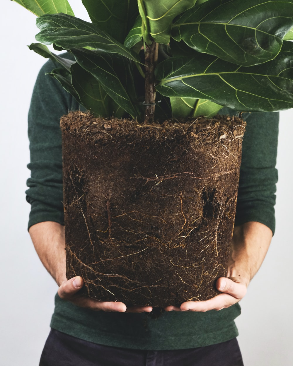 person holding brown clay pot with green plant
