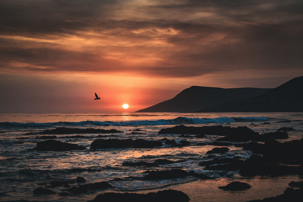 silhouette of bird flying over sea during sunset