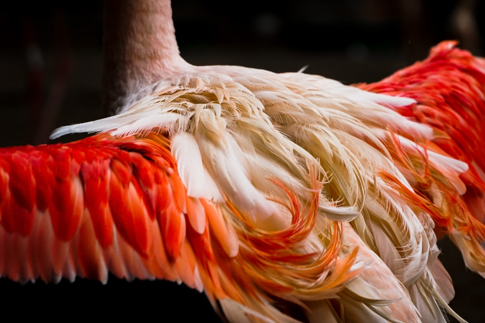 white and orange bird in close up photography