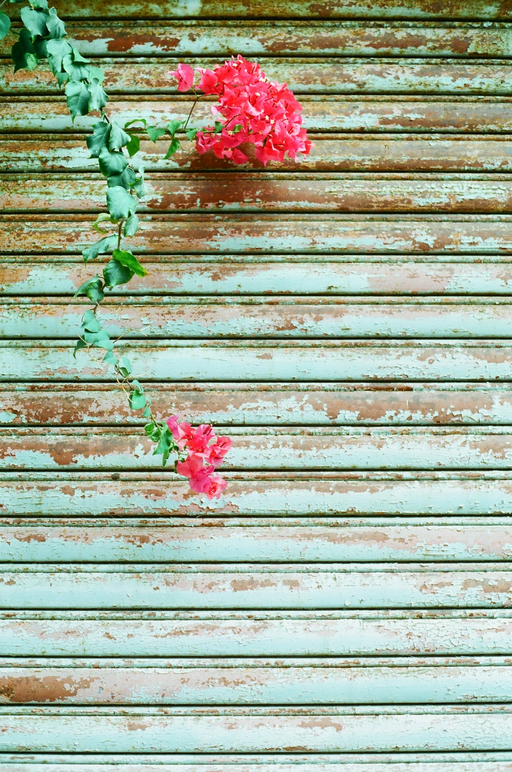 red and green plant on brown wooden surface