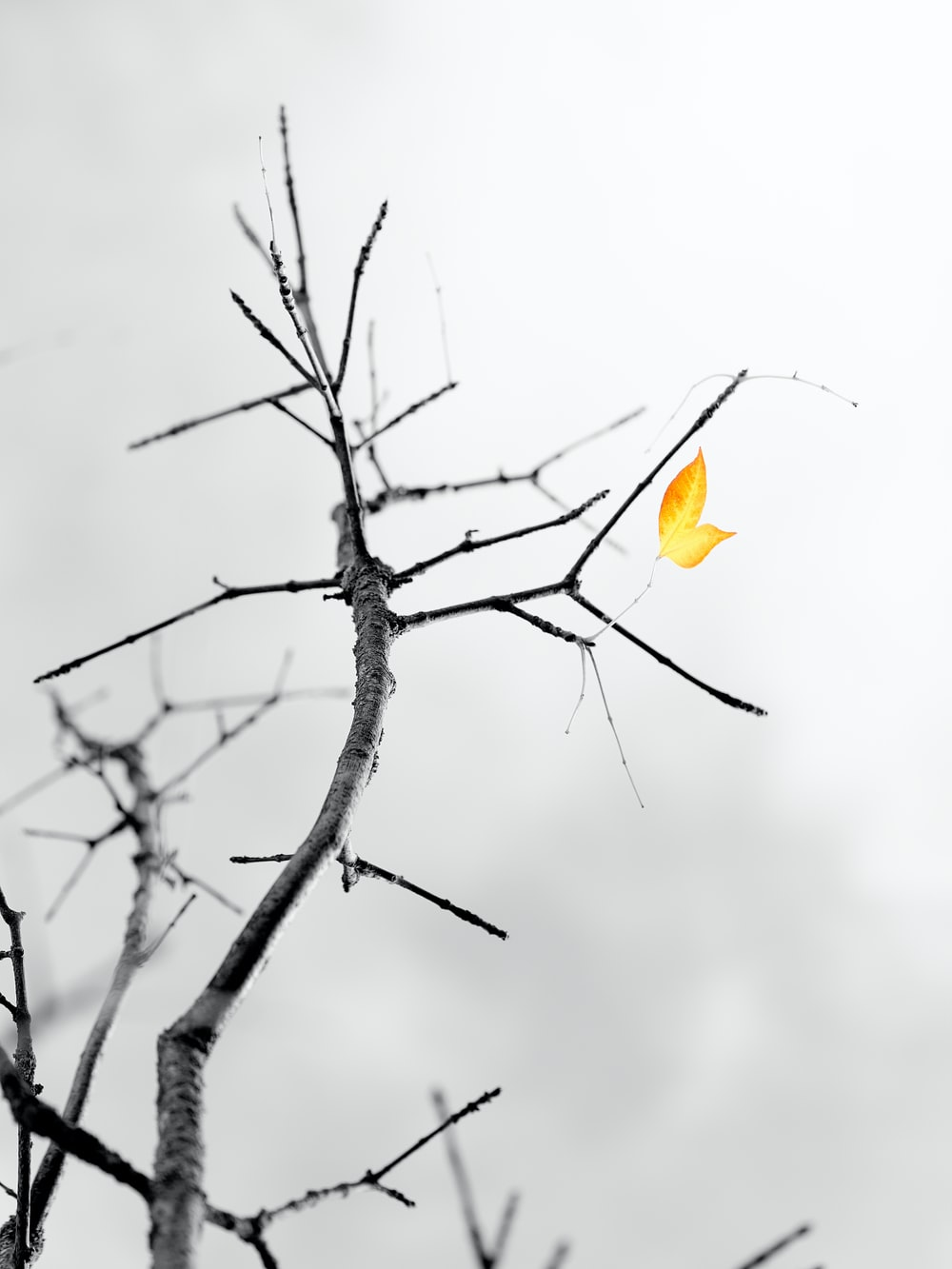 yellow flower on brown tree branch