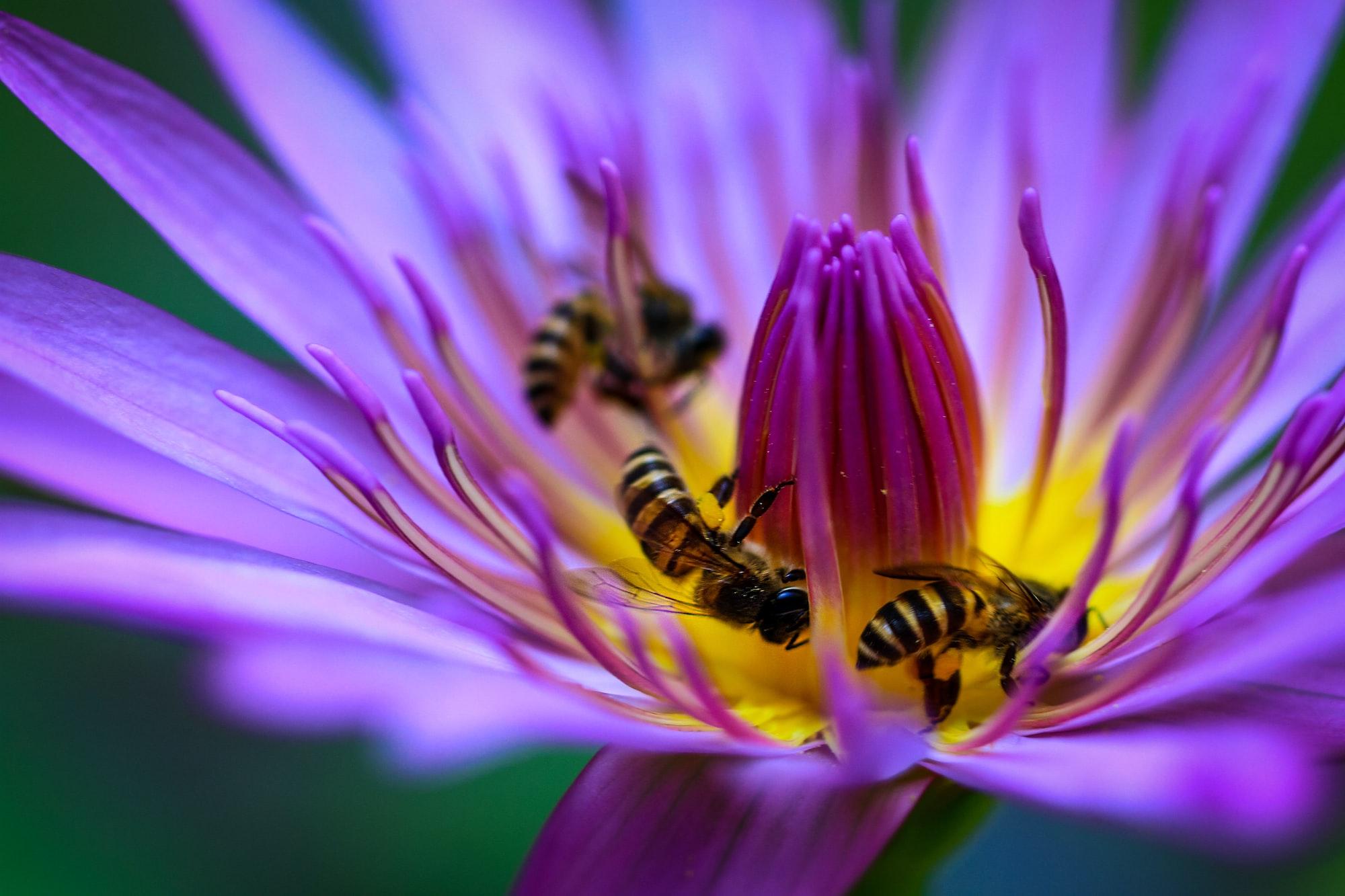 Move over honeybees: Edete deploys artificial pollination on Australia's almonds