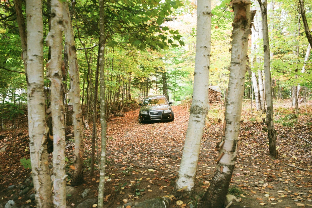 black suv in the middle of the forest during daytime