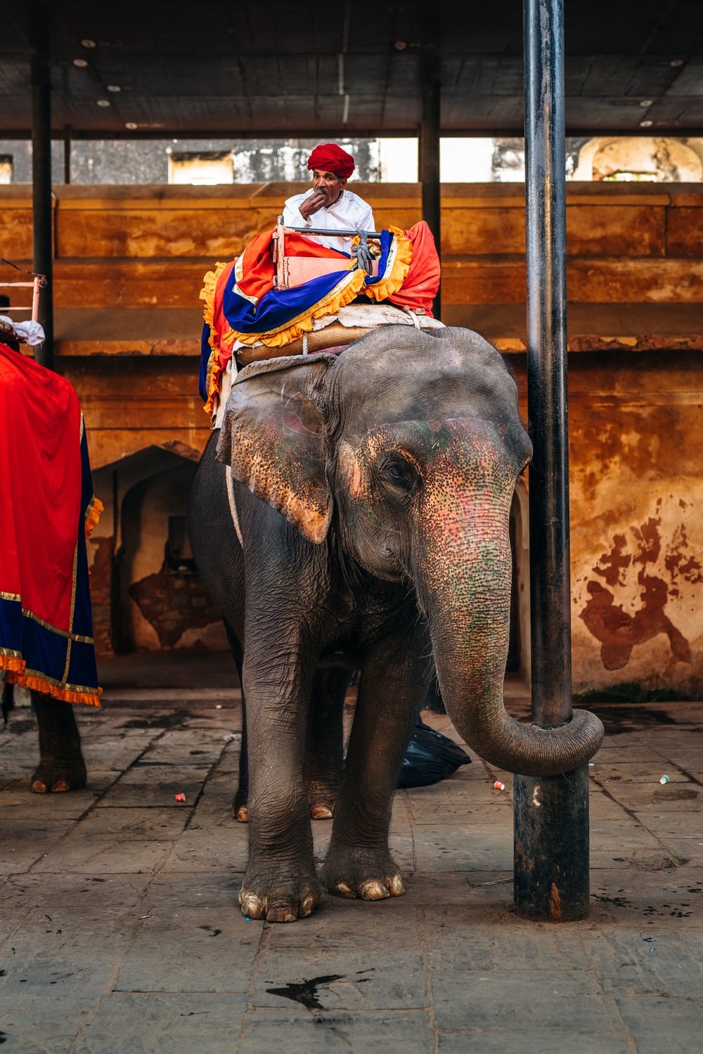 man in red and white shirt riding elephant