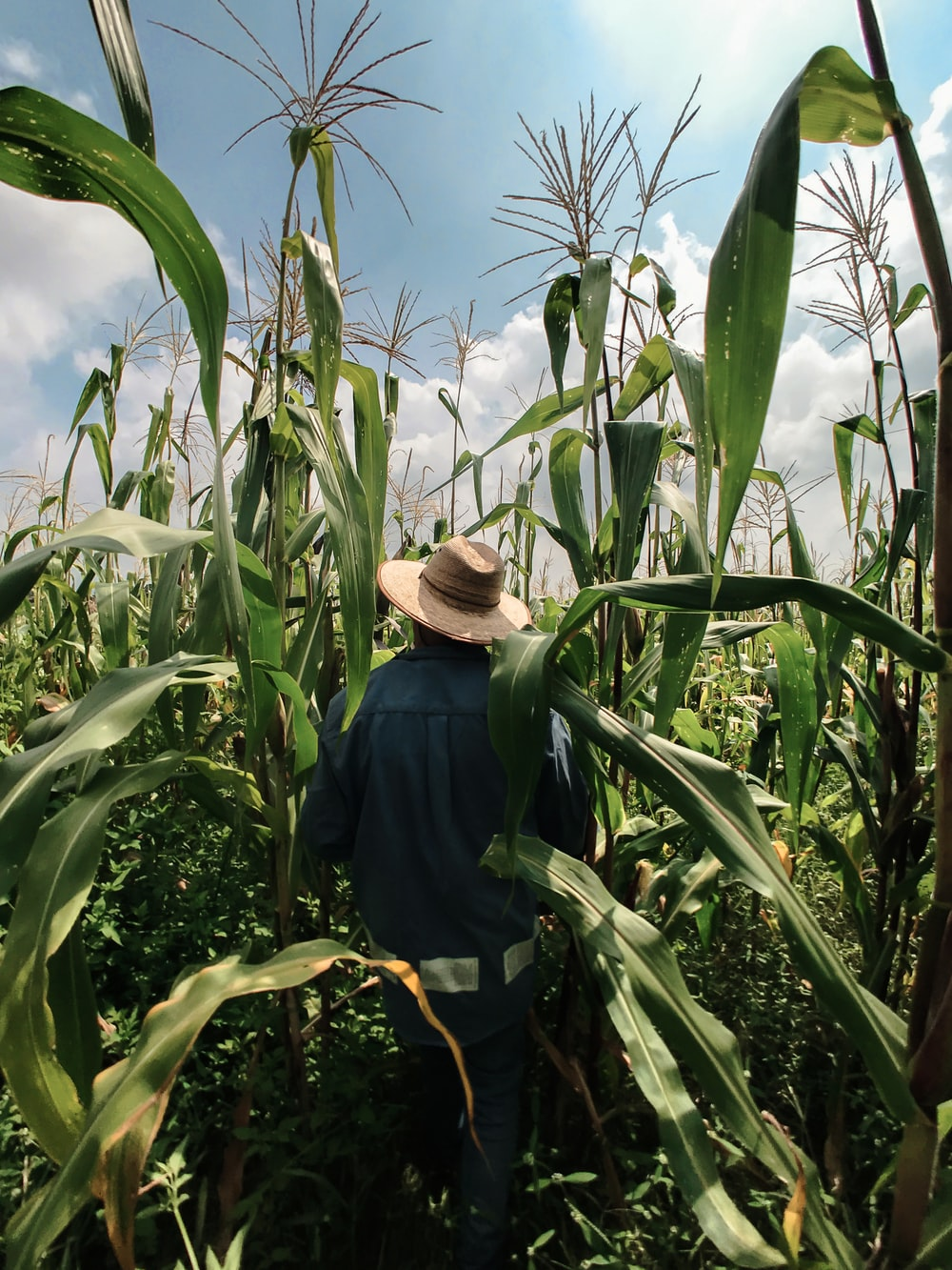 woman in blue long sleeve shirt wearing brown hat standing in corn field during daytime
