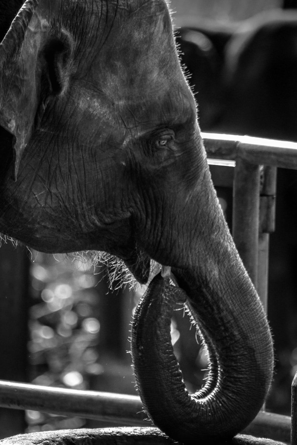 elephant in grayscale photography during daytime