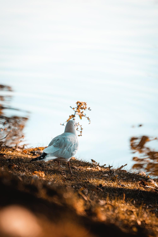 white bird on brown grass during daytime