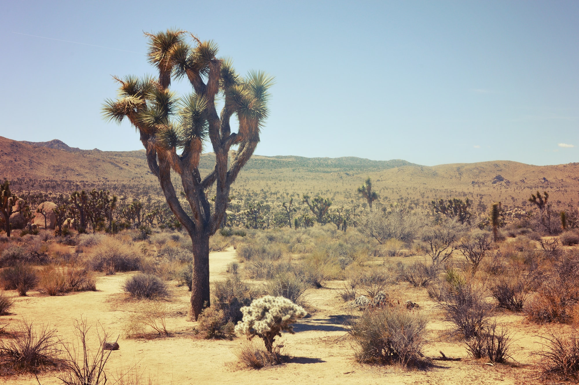 8 Places to See Extraordinarily Bizarre Trees