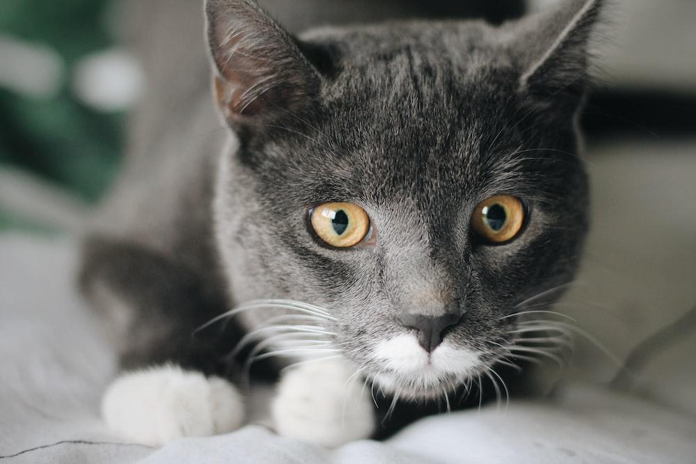 black and white cat on white textile
