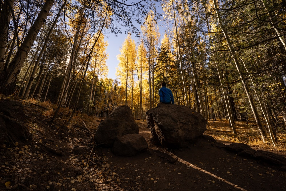 person in blue jacket sitting on brown rock in the middle of the forest during daytime