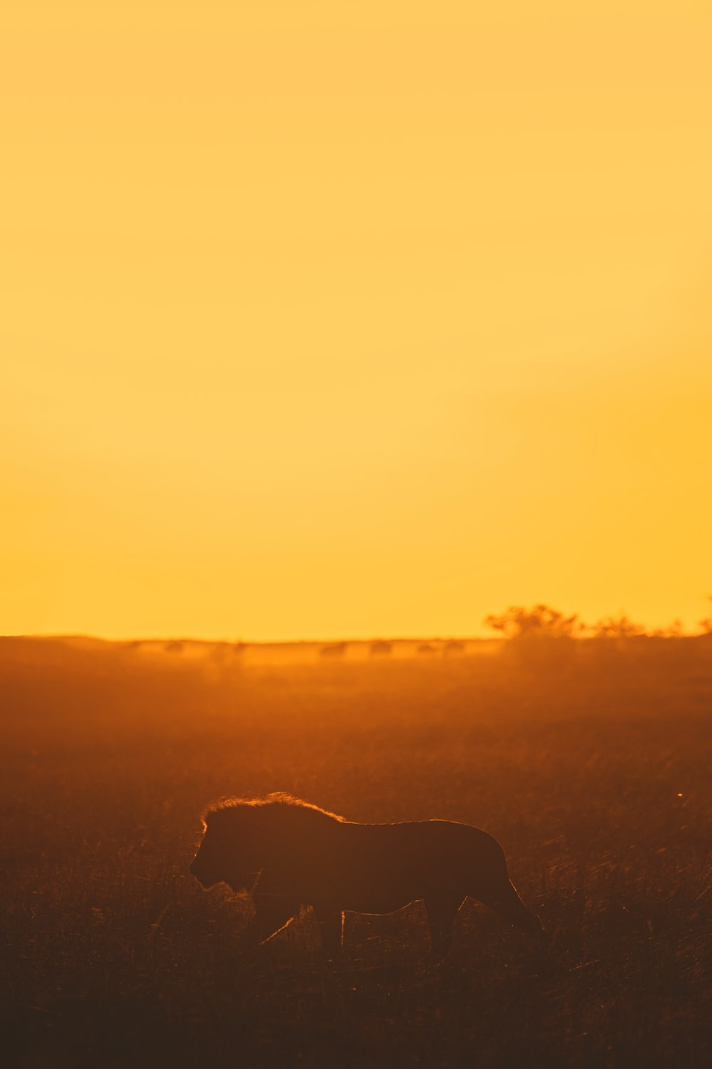 silhouette of dog during sunset
