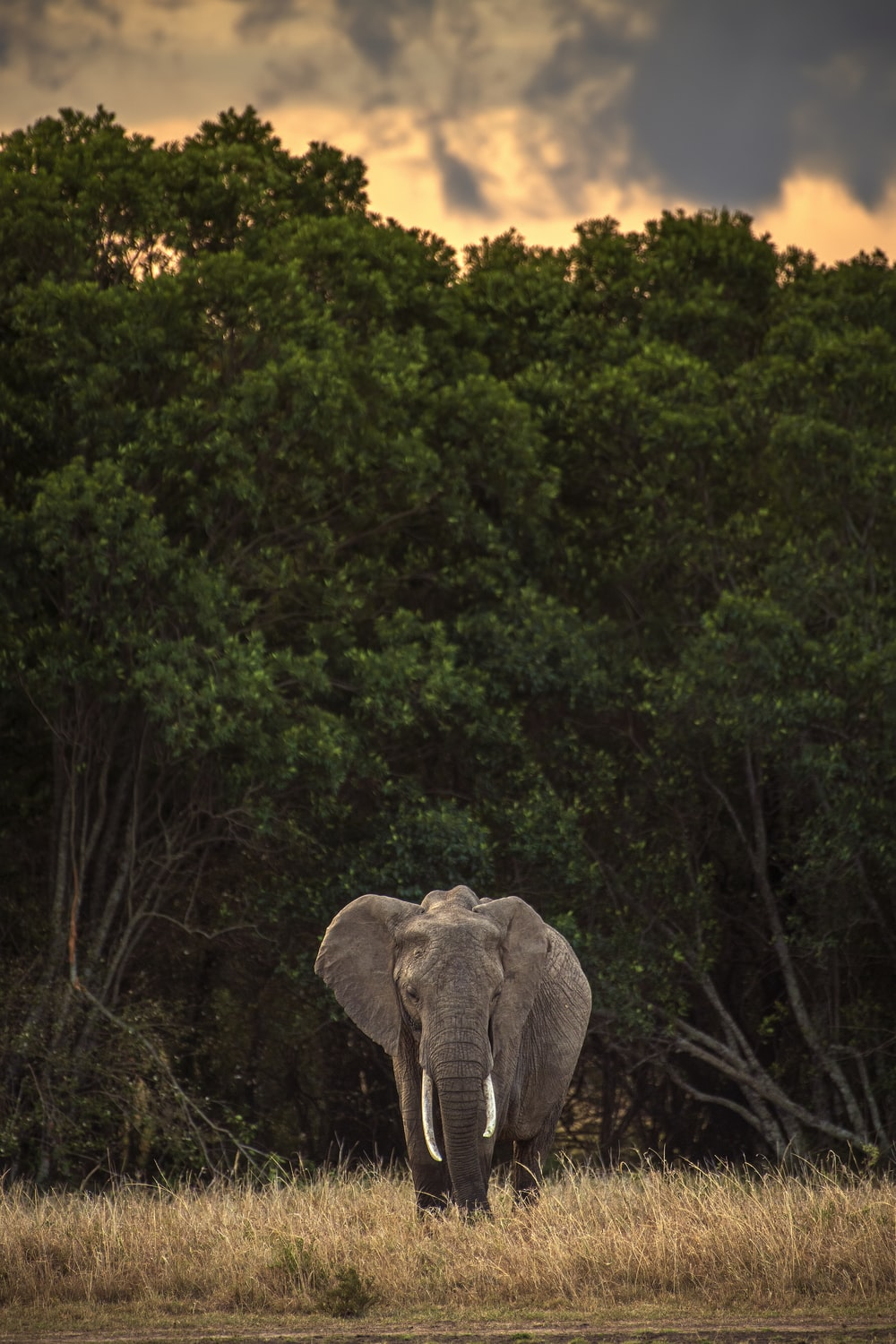 elephant standing on green grass field near green trees during daytime