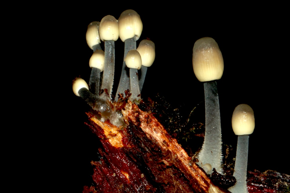 white and brown mushrooms on fire