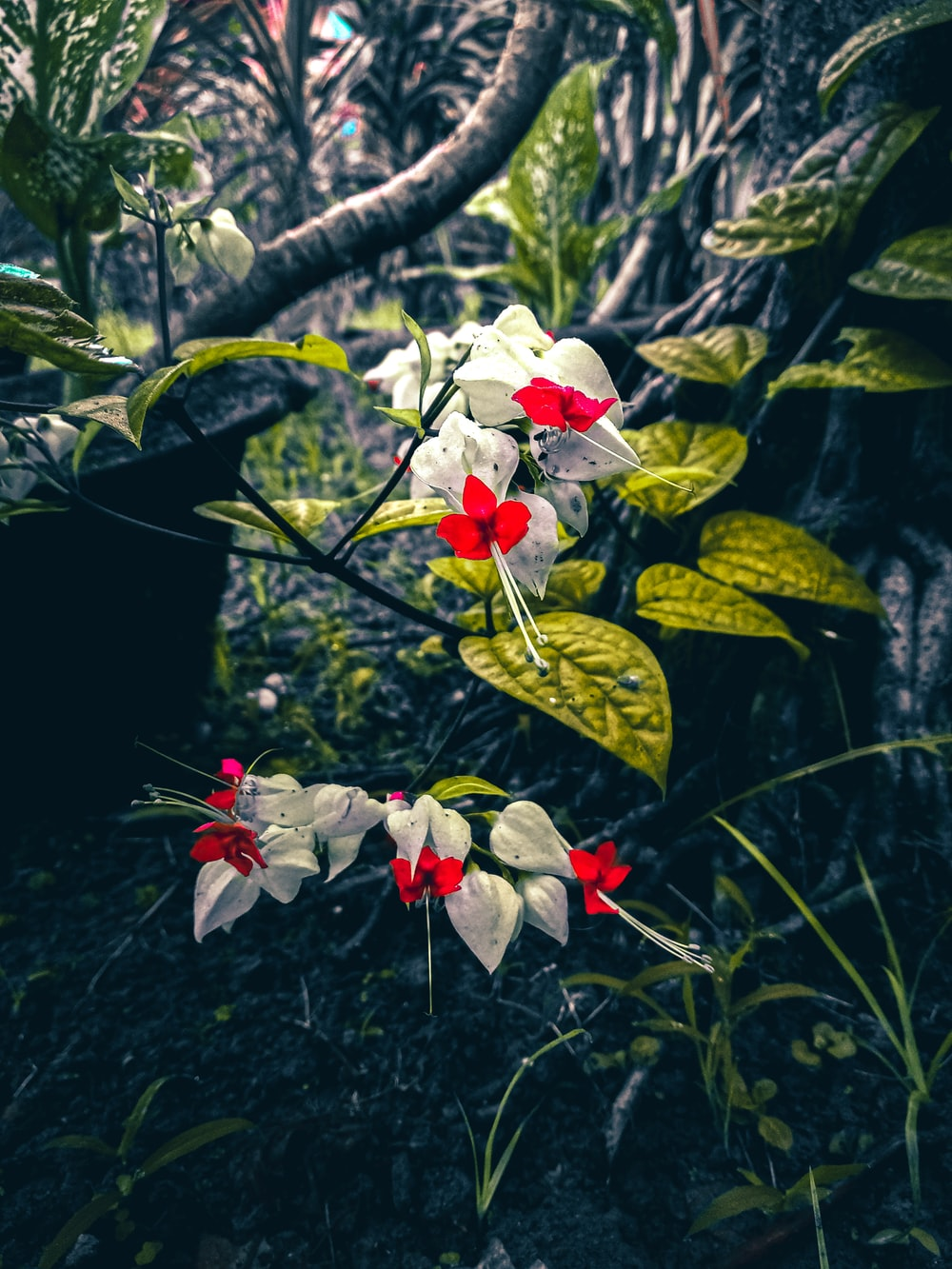 Beautiful Flowers Pictures Download Free Images Stock Photos On Unsplash