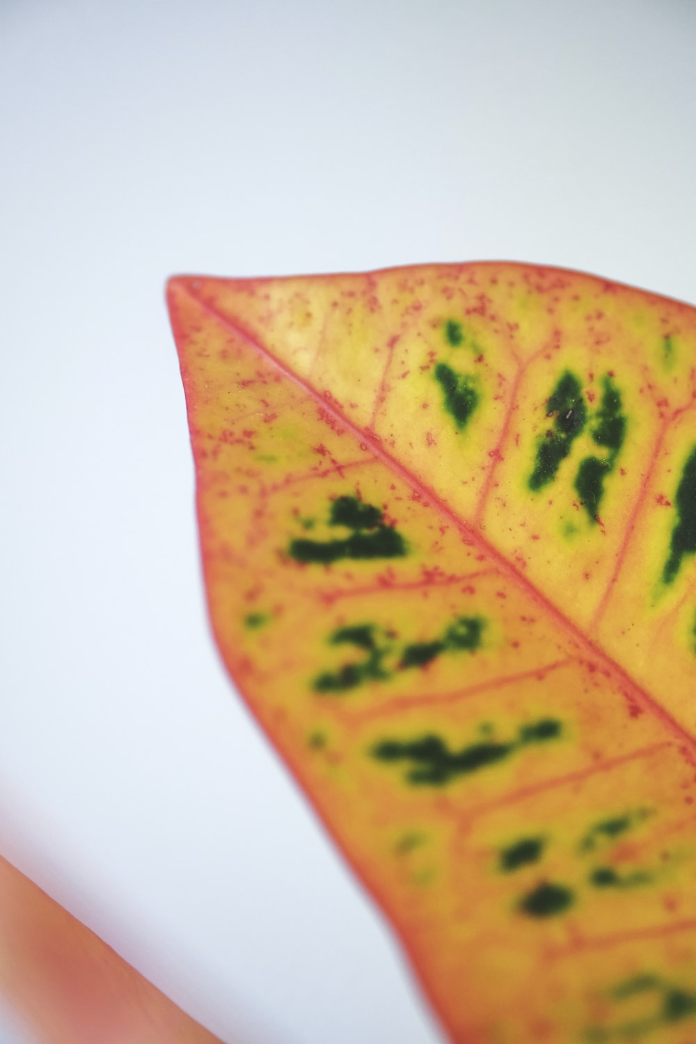 yellow and green leaf on white surface
