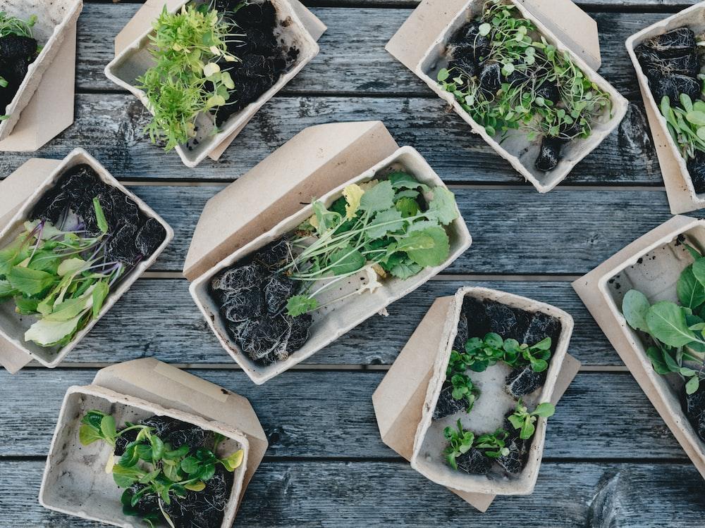 green leaves on white ceramic bowls sustainable procurement Winnipeg Metropolitan Region