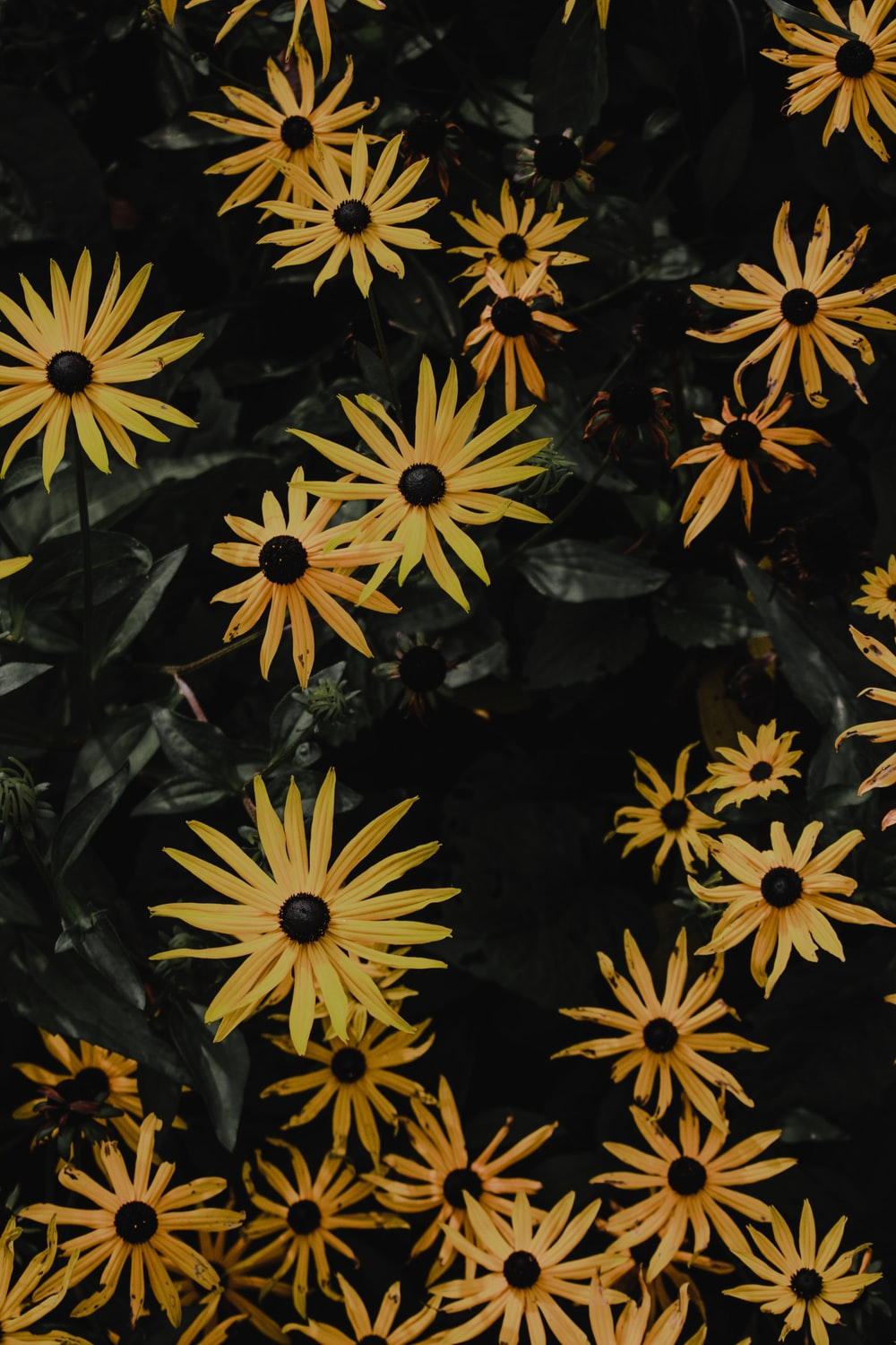 yellow and black flowers in close up photography