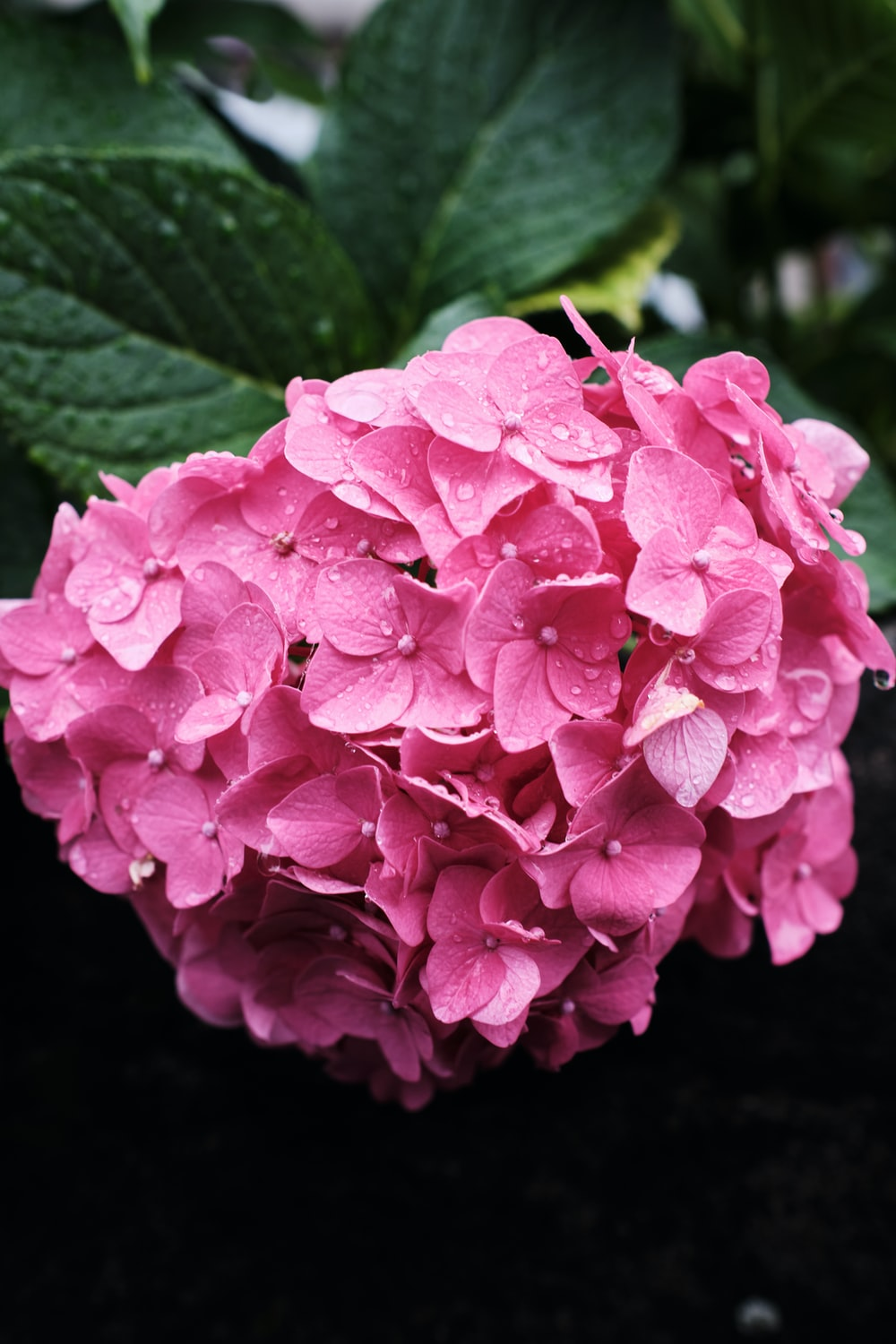 pink flower in close up photography
