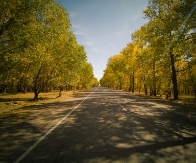 gray concrete road between green trees during daytime armenia zoom background