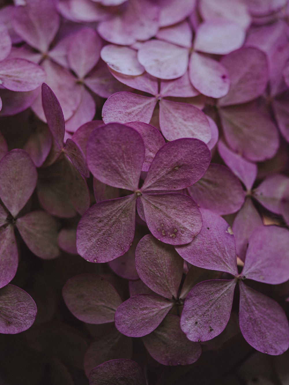 purple and white flower petals