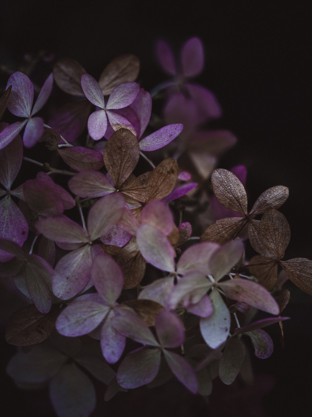 purple and green leaves plant