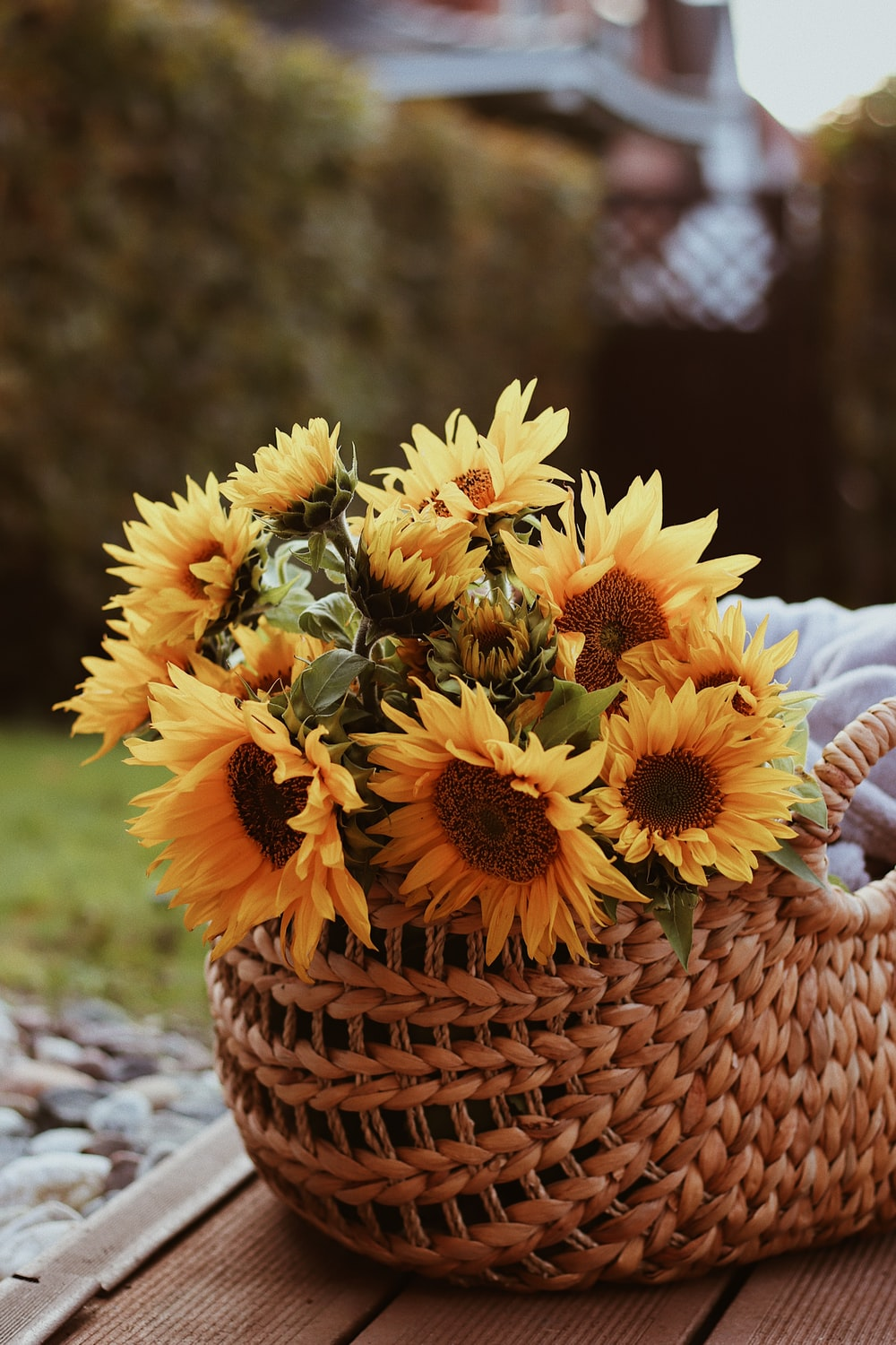 yellow sunflower in brown woven basket