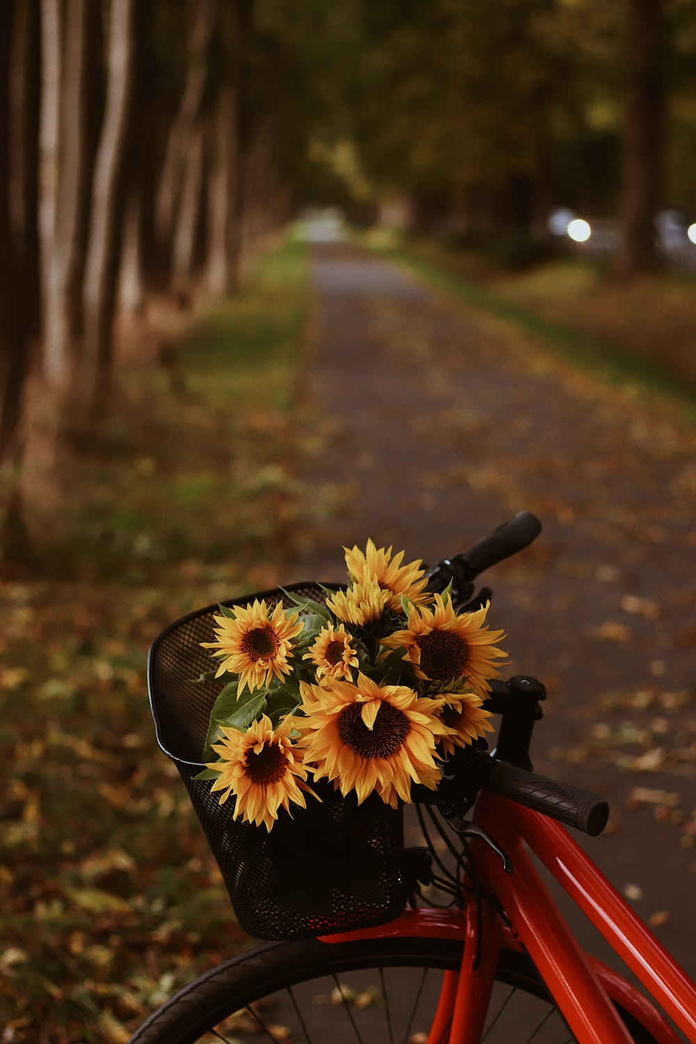 yellow flowers on black bicycle