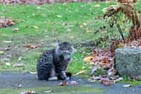 Cat in the garden (Haiku) haiku stories
