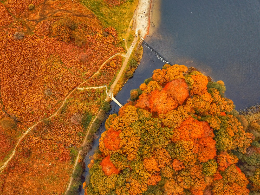 aerial view of green and brown trees beside river during daytime