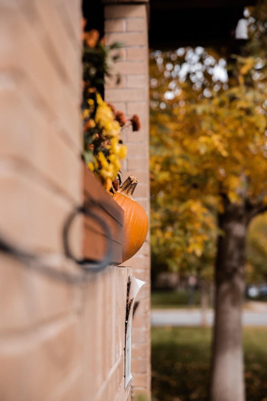 orange fruit on black metal fence during daytime