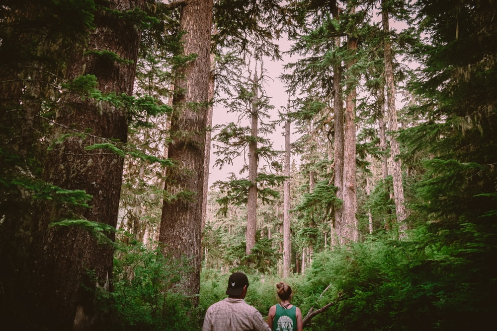 man and woman sitting on ground surrounded by trees during daytime