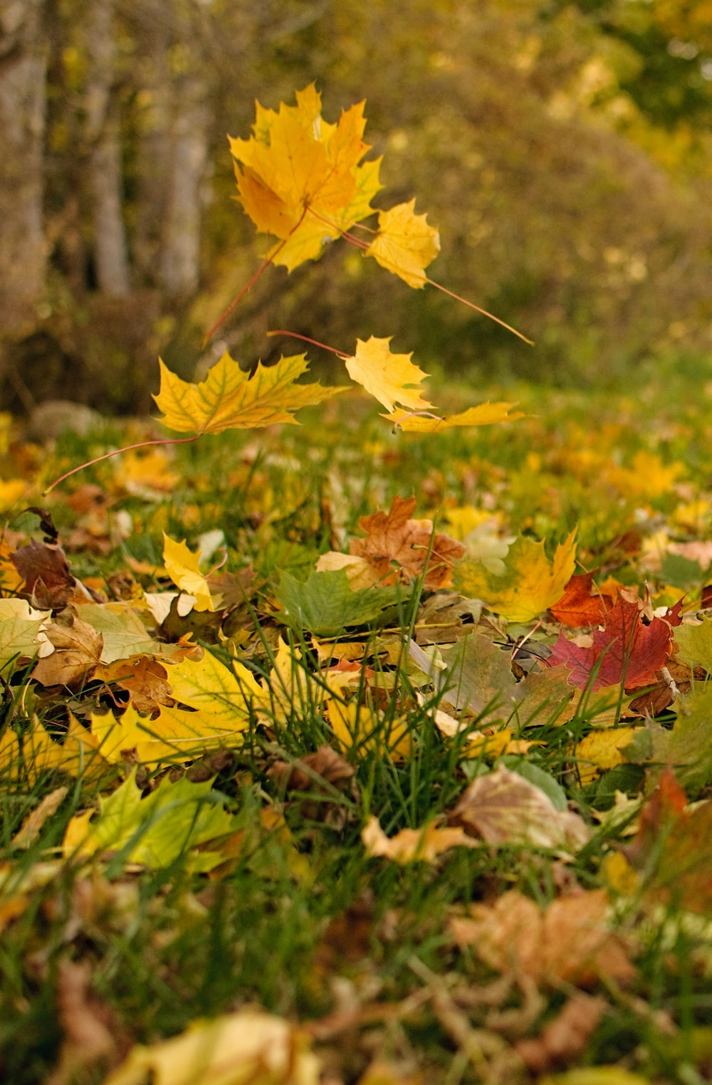 brown and yellow maple leaves on green grass during daytime